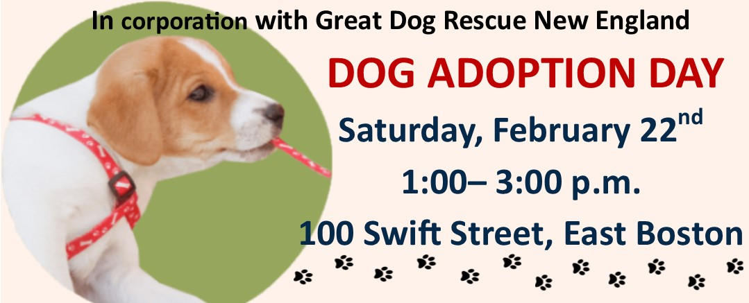 In cooperation with Great Dog Rescue New England Dog Adoption Day, Saturday, February 22nd 1;00-3:00 p.m. 100 Swift Street East Boston